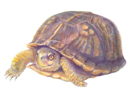 Happy Turtle by Dale Morgan